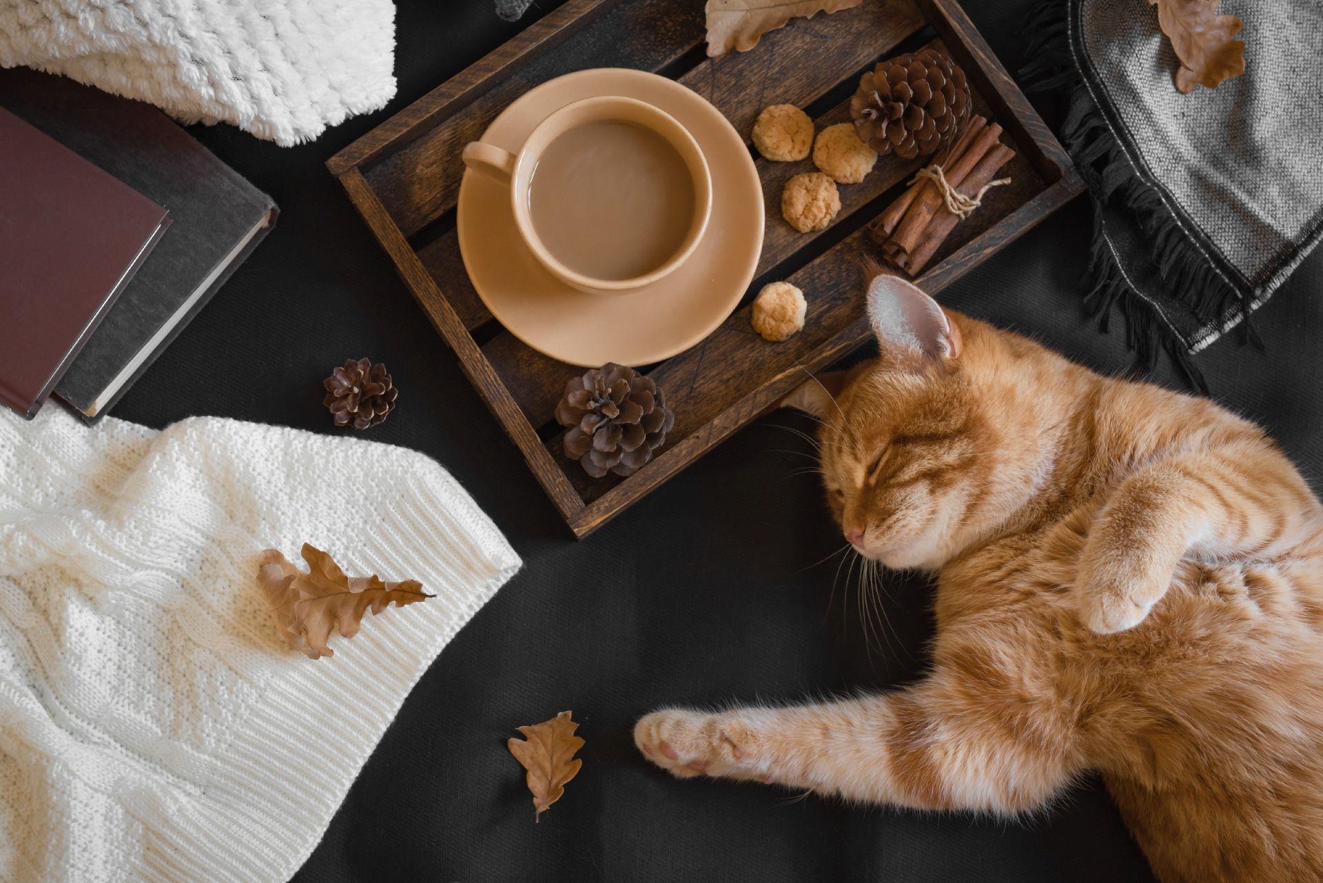 Katze liegt gemütlich neben Tablett & Decken
