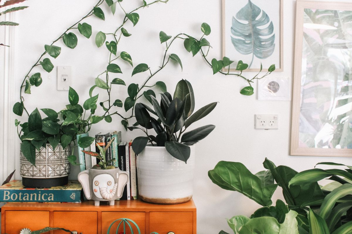 Boho-Zimmer mit Pflanzen