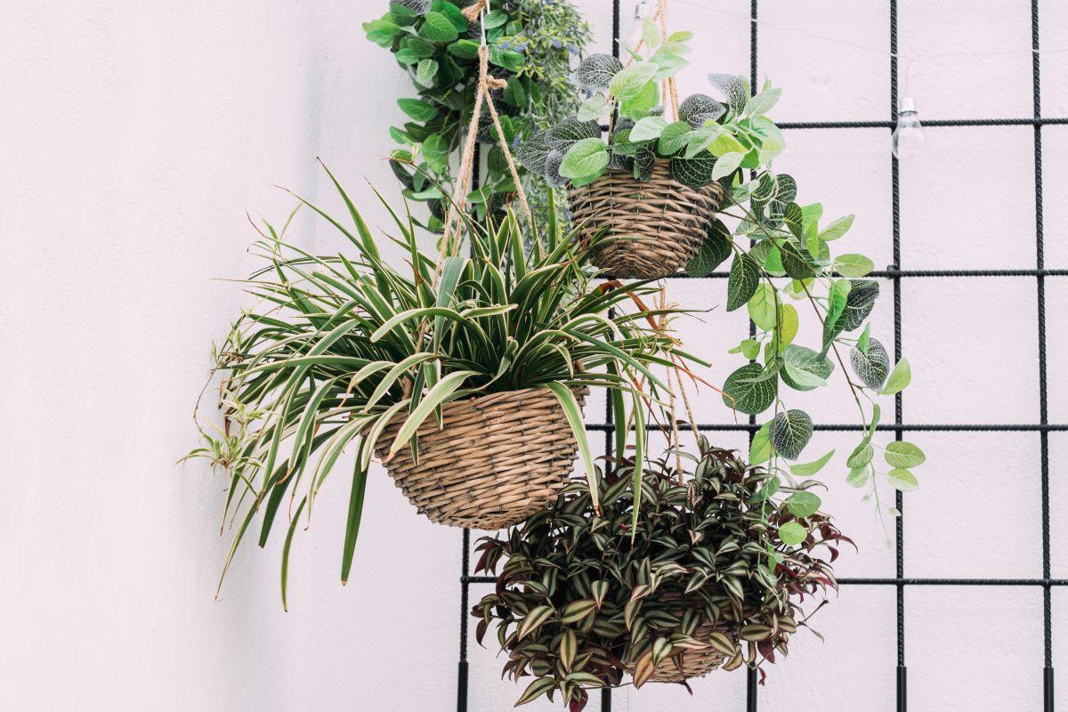Hängende Körbe mit Pflanzen